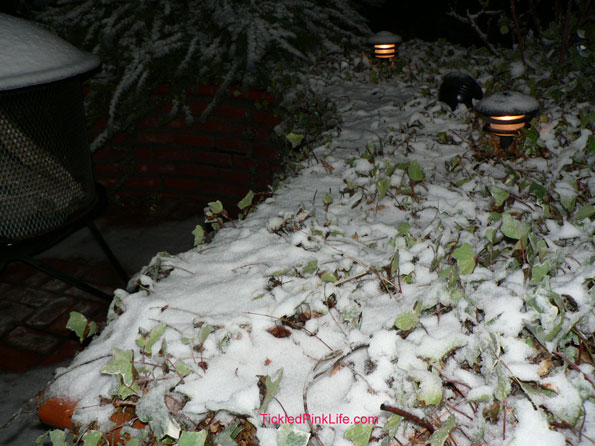 Snow fall north of Los Angeles January 2, 2011 planter