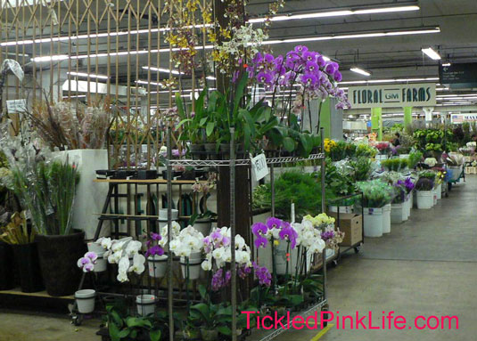 Los Angeles and Southern California Flower Markets-orchids