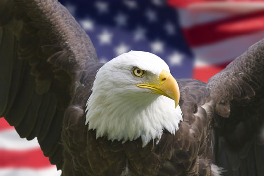 Bald Eagle and American flag celebrating the fourth of July