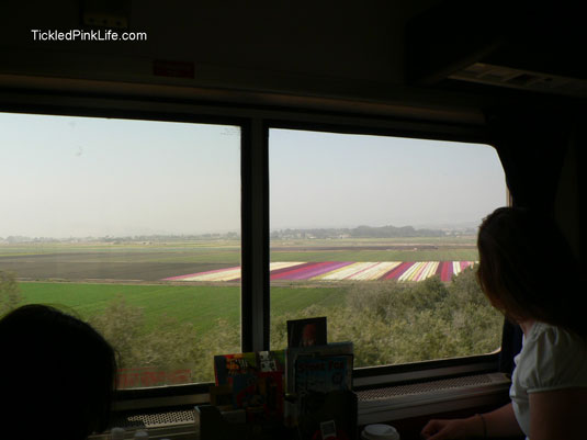 Traveling by train on Amtrak along flower fields